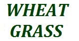 WHEAT GRASS 2.2LBS